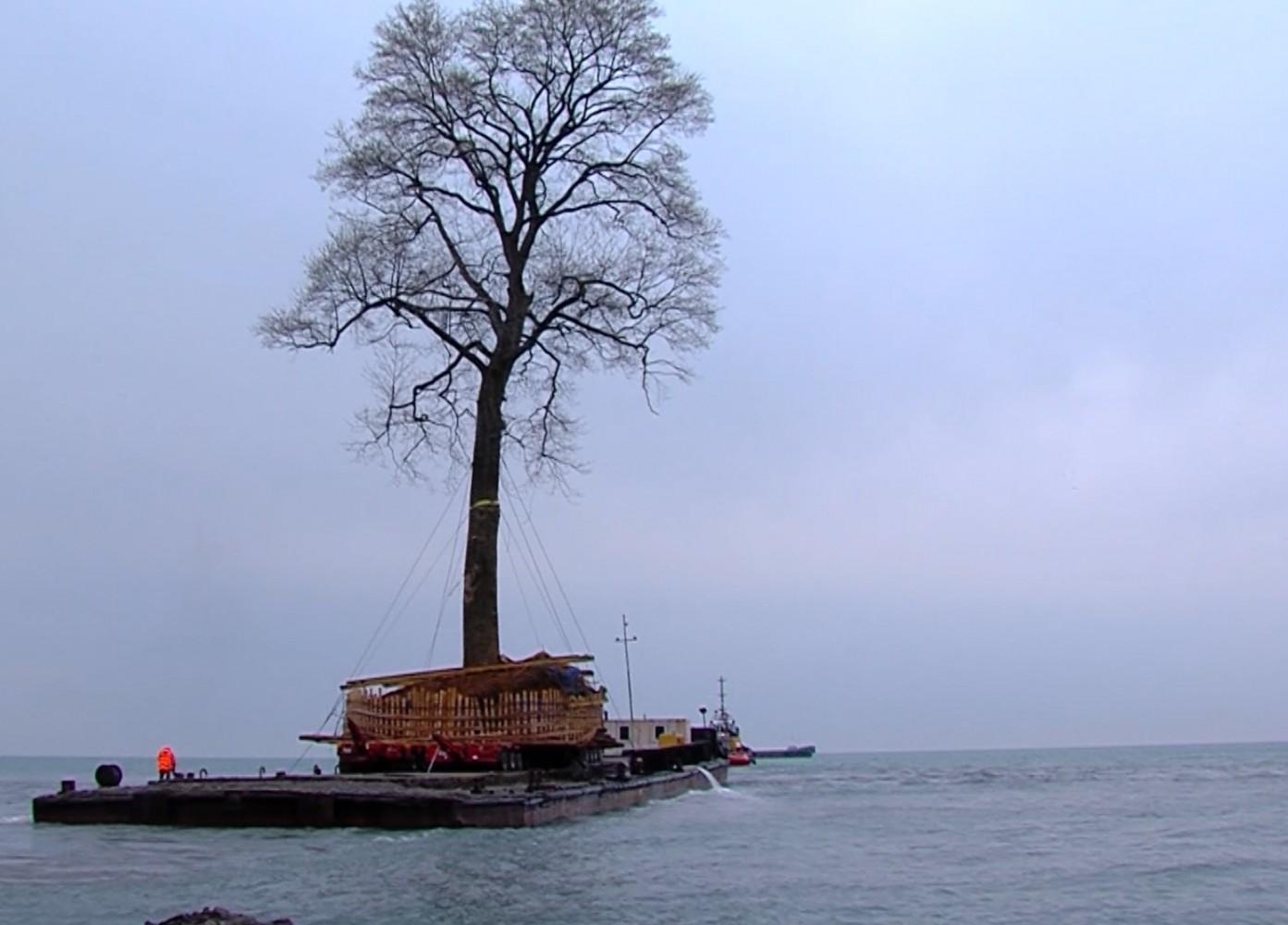 Перевозка тюльпанового дерева. Фото с сайта presa.ge