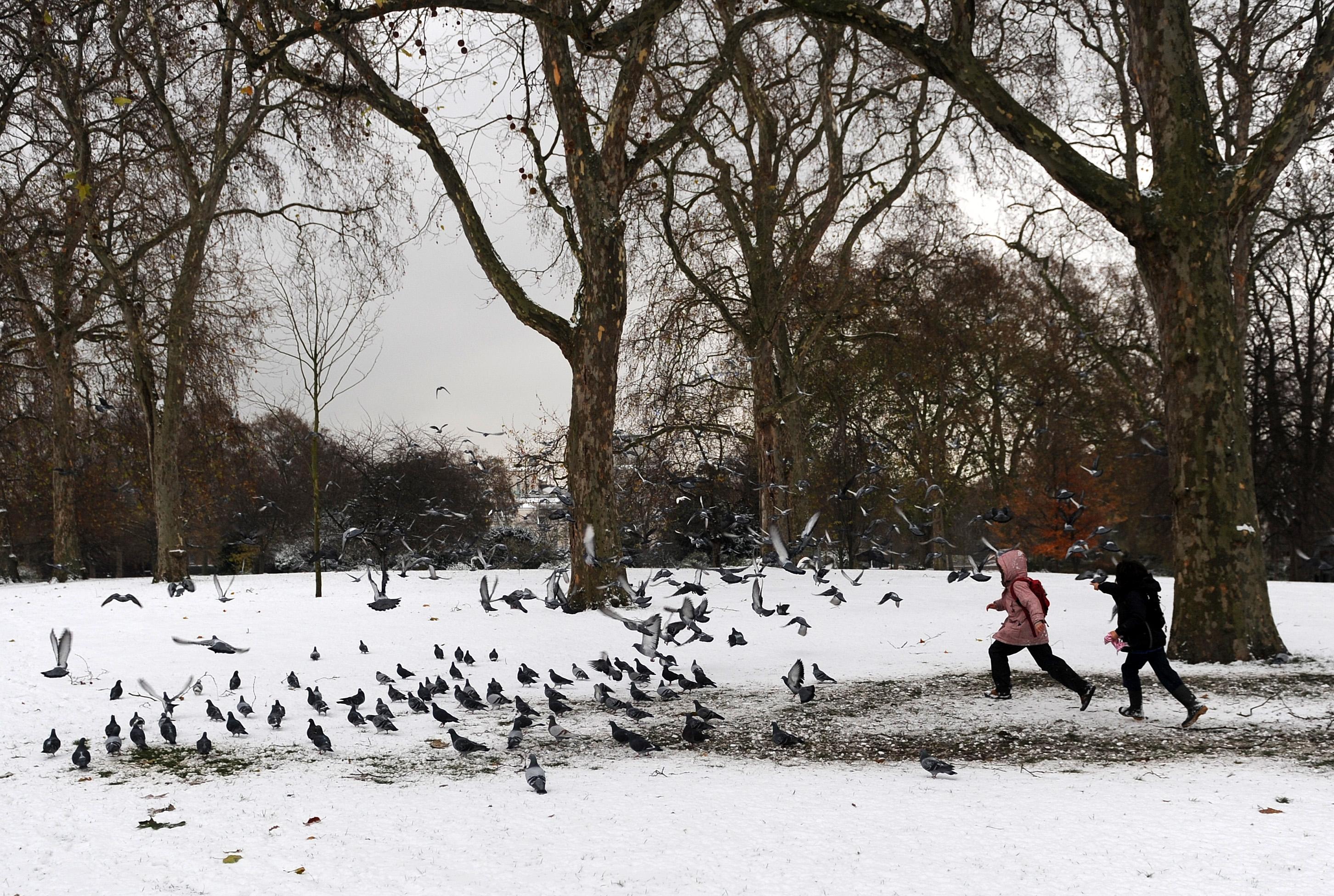 Городской совет Олердейла разыскивал человека, незаконно кормящего голубей. Фото: EPA/ANDY RAIN