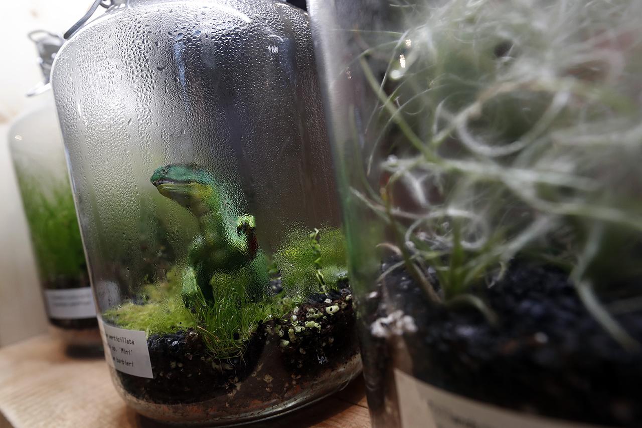 Динозавры существуют и сейчас! Пусть и пластиковые