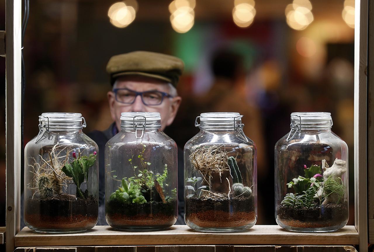 Растения в банке - гораздо оригинальнее, чем в горшках