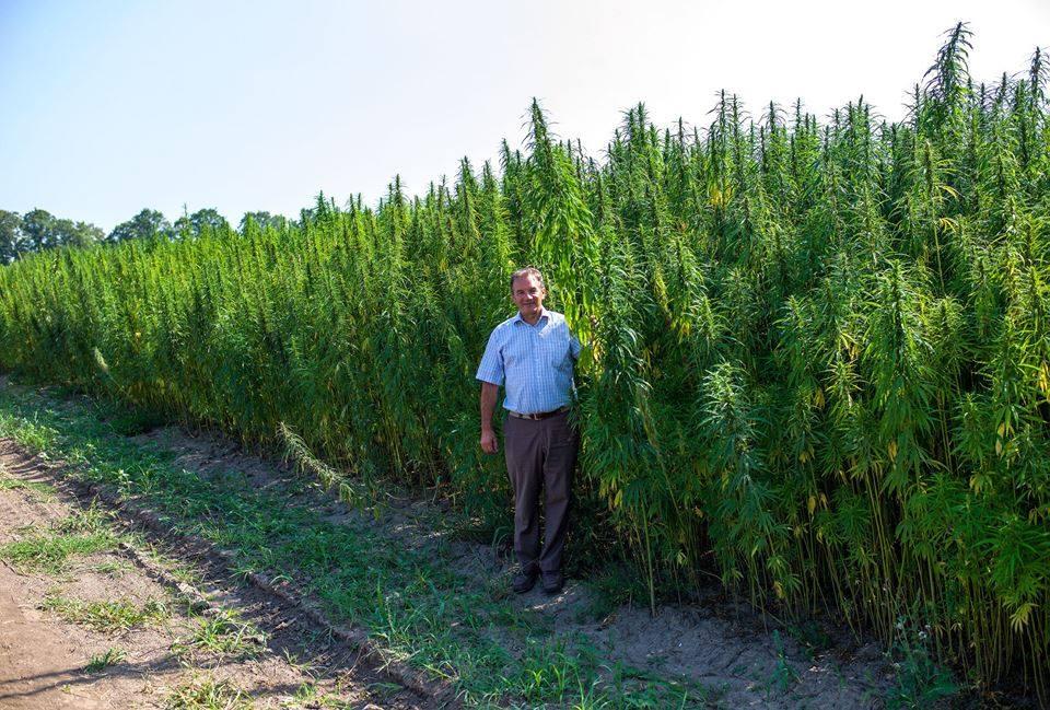 Петиція на сайті Верховної Ради з вимогою узаконити використання марихуани з медичною метою набрала необхідну кількість голосів - Цензор.НЕТ 975