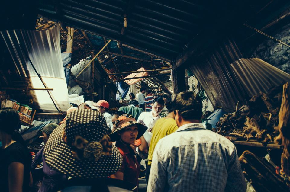 stocksnap.io/Quang Anh