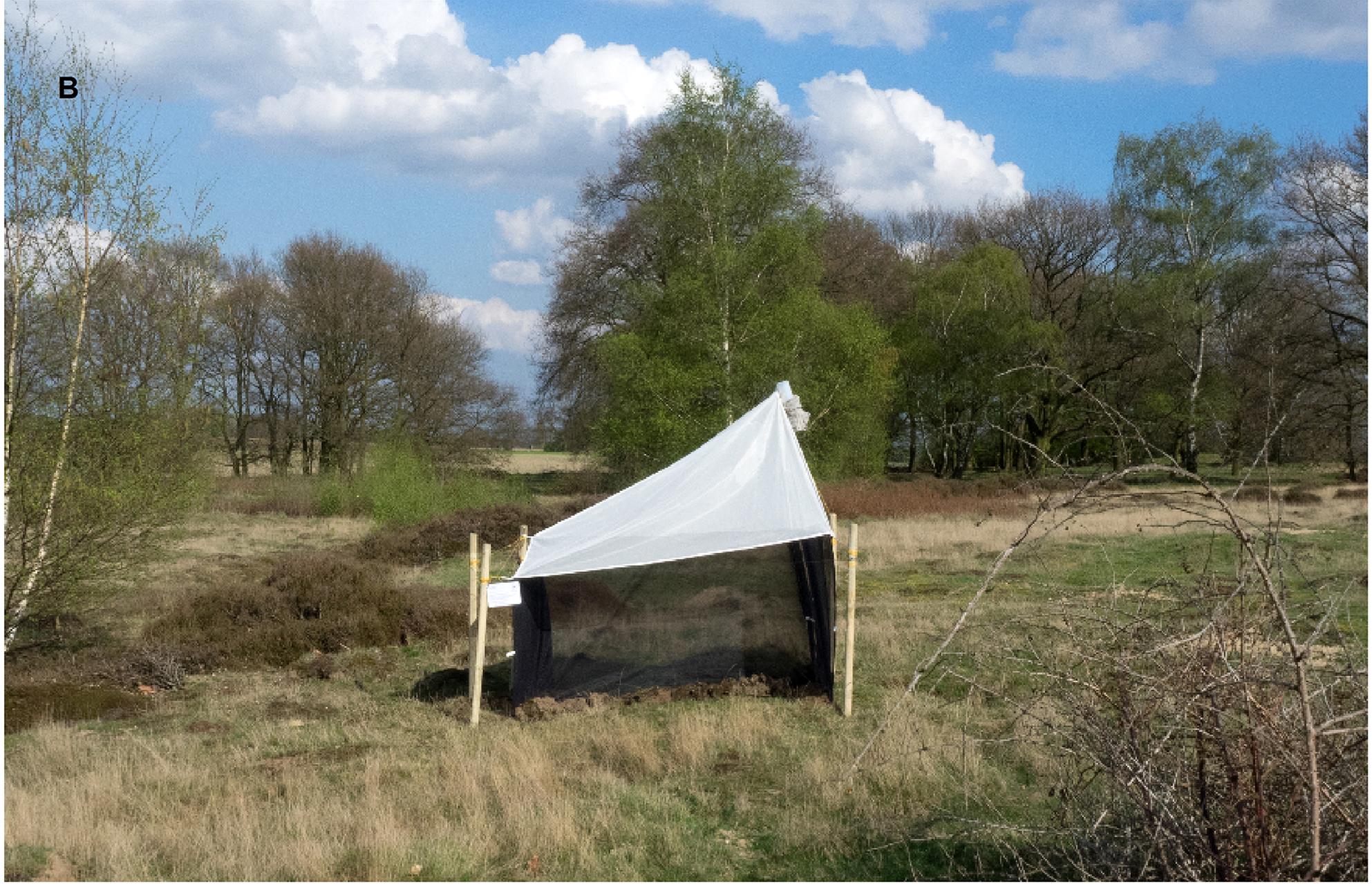 Так выглядит марлевая ловушка для замера биомассы насекомых / Источник: PLOS One