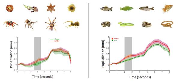 Зеленые кривые показывают реакцию зрачков младенцев на изображения цветов и рыб, а красные - на пауков и змей