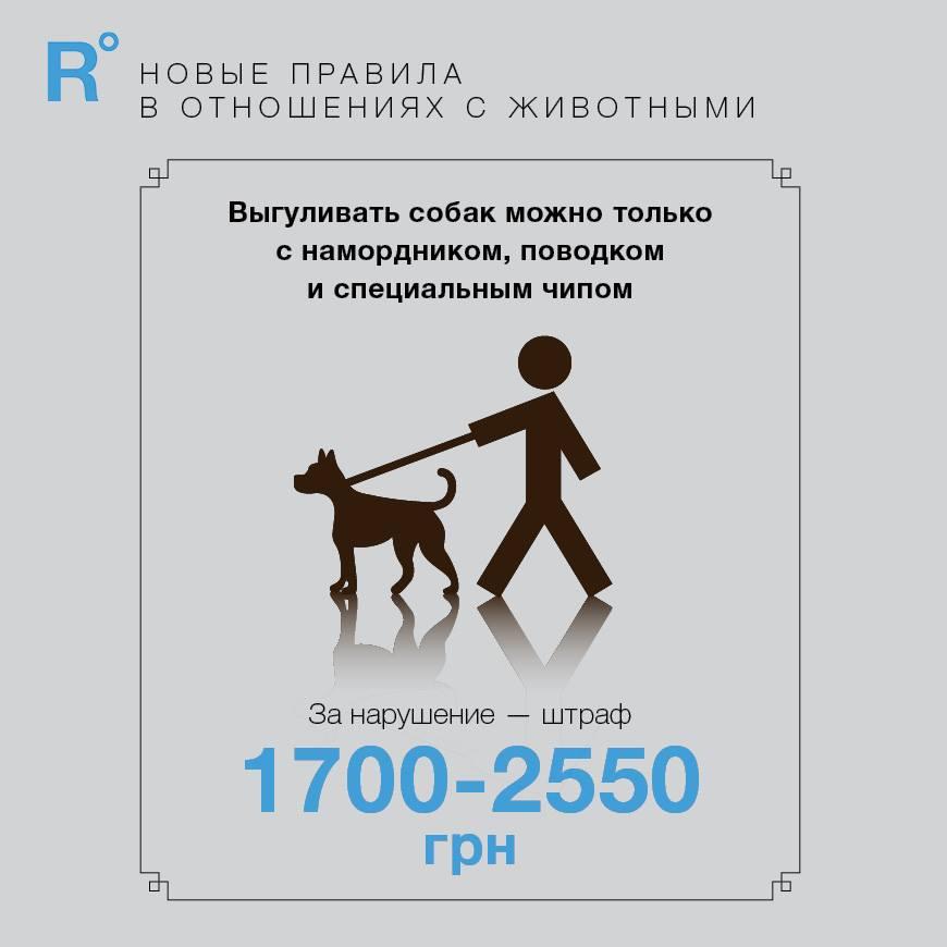 Регистрация всех кошек и штрафы без чипов: что предлагают в Раде