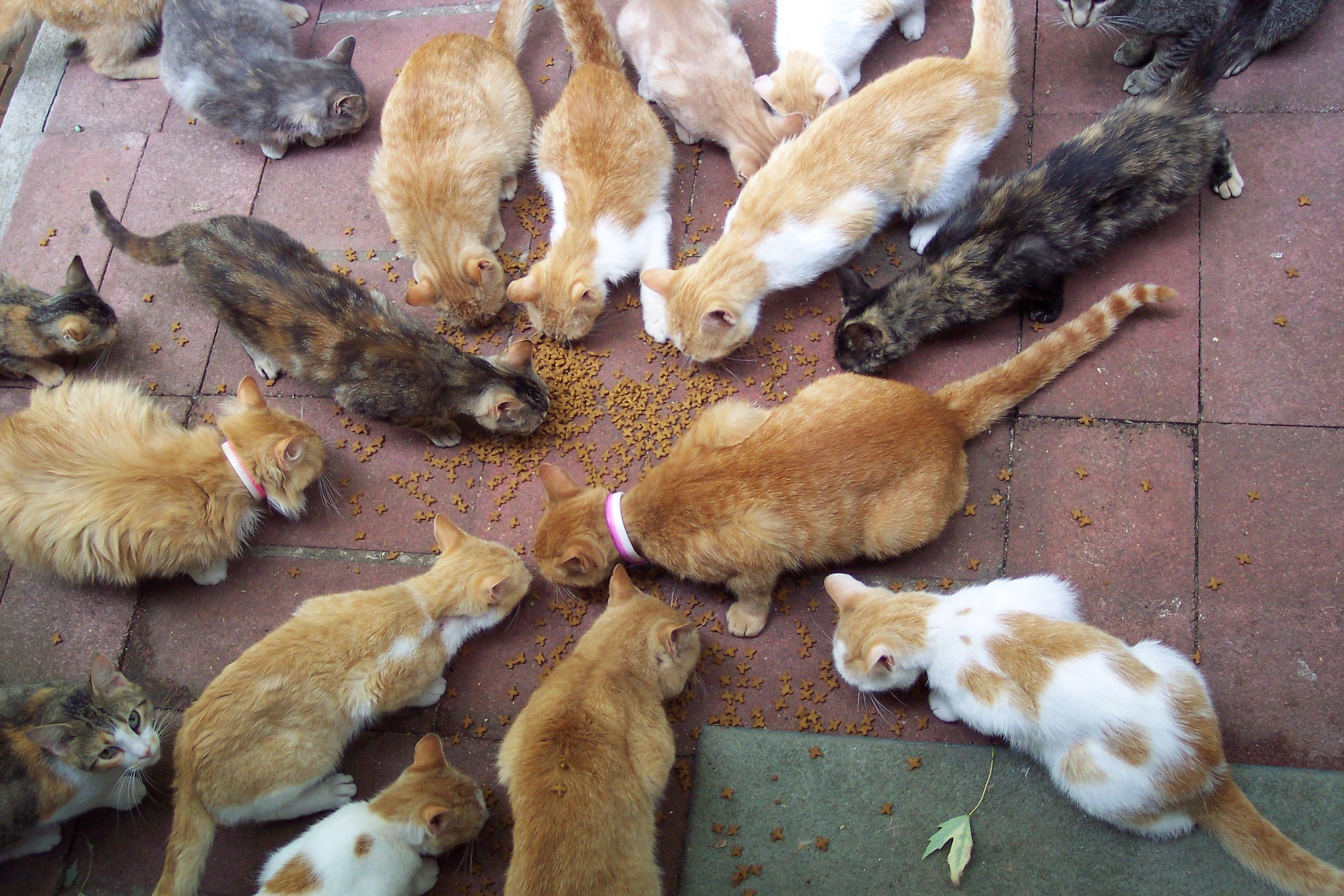 ВКиеве брошен клич: ищут волонтеров, чтобы гладить котов