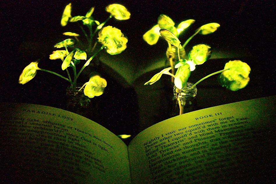 Освещение книги («Потерянный рай» Джона Милтона) нанобионными светоизлучающими растениями