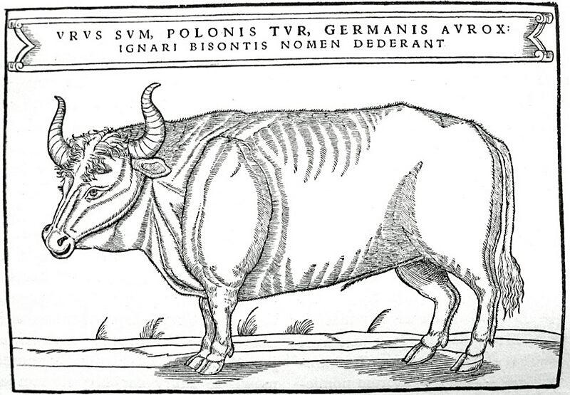 Тур. Иллюстрация из книги Сигизмунда фон Херберштейна, 1556 год / Источник: Wikipedia