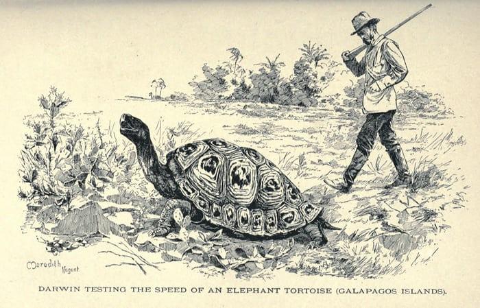 Чарльз Дарвин и галапагосская черепаха. Иллюстрация Мередит Нуджент, 1891 год