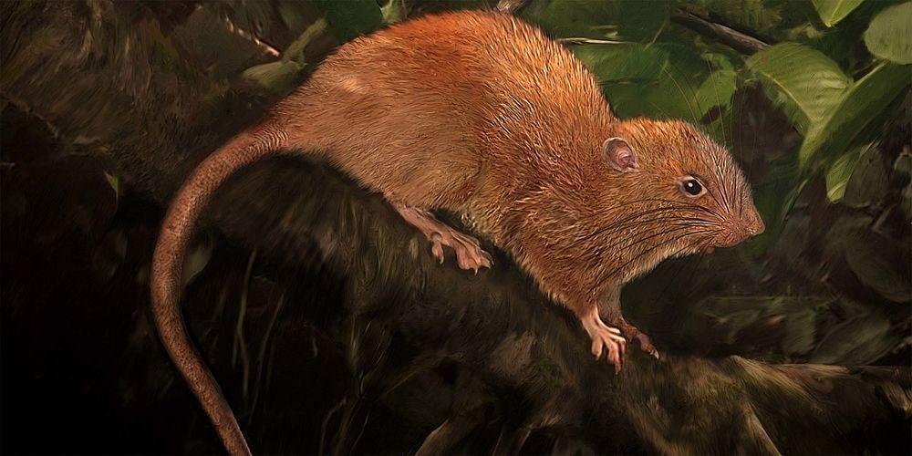 Новые виды животных, открытые в прошлом году