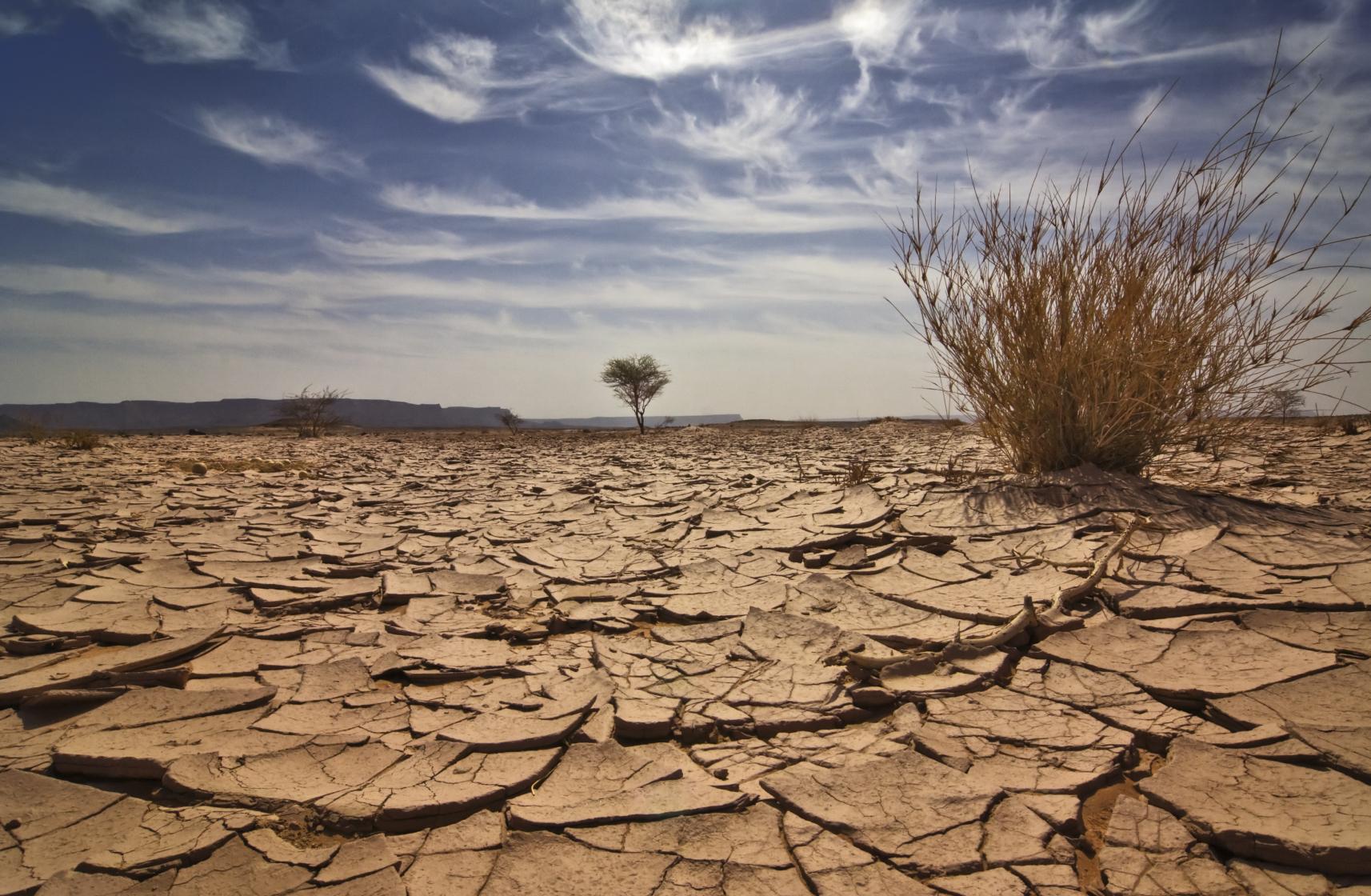 Годы становятся все более сухими, влаголюбивые растения и животные исчезают