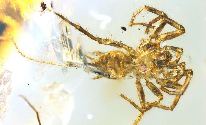 Окаменелость древнего паукообразного в янтаре / BO WANG