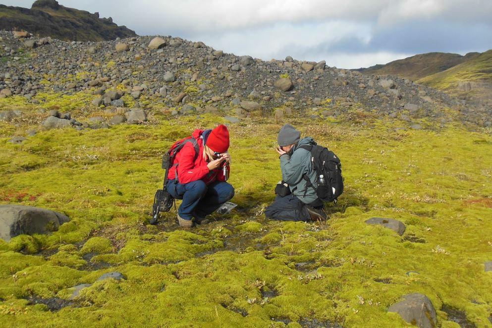На лавовом поле в Исландии исследователи изучают мох, напоминающий самые ранние наземные растения