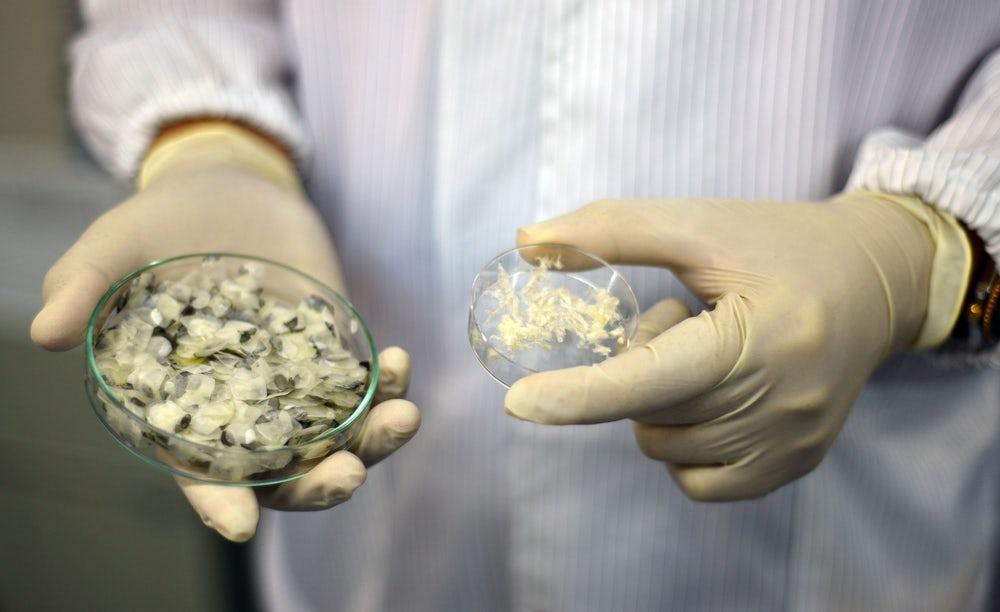 Рыбья чешуя, использованная в исследовании / Фото: Сингапурский технологический институт