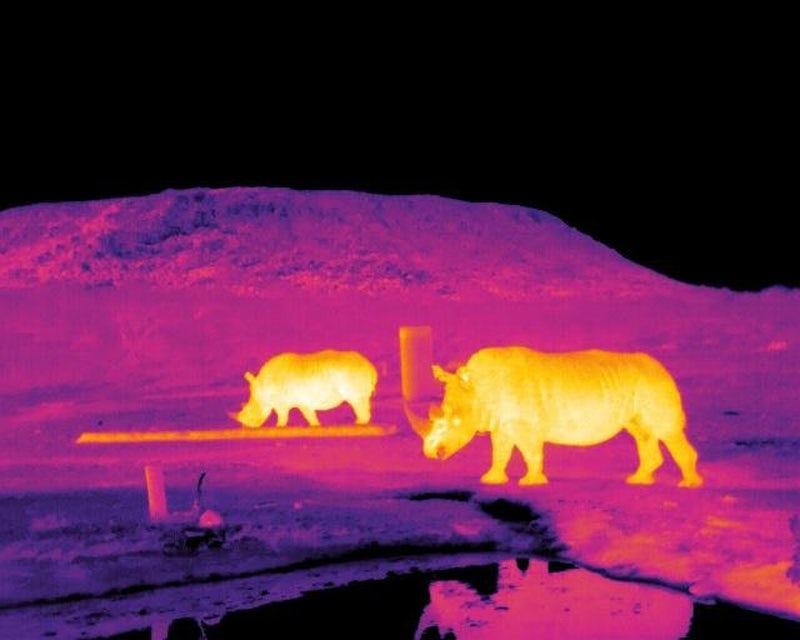 Инфракрасные изображения носорогов