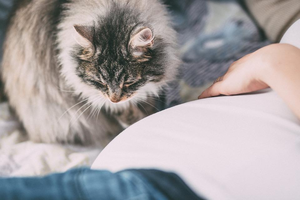 Дело в том, что у животных аллерген есть и в эпидермисе, и в перхоти. Но самый главный аллерген, особенно у кошек, содержится в слюне