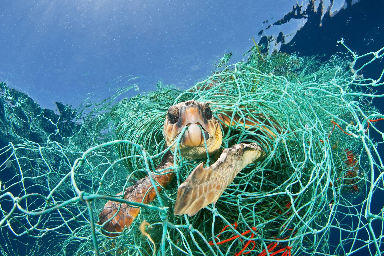 Птицы, рыба и черепахи Средиземного моря задыхаются от пластика