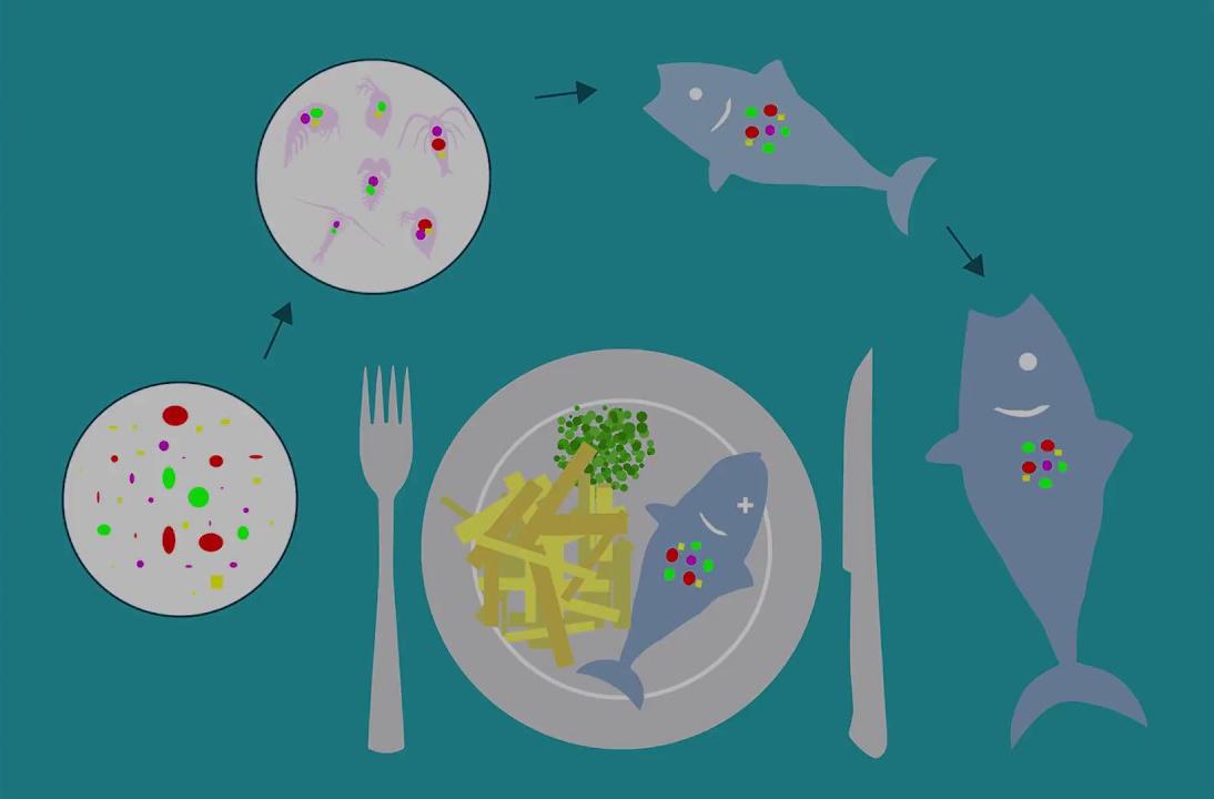 Негативное воздействие микропластика