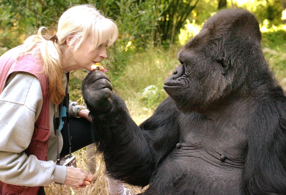 Коко и доктор Пенни Паттерсон