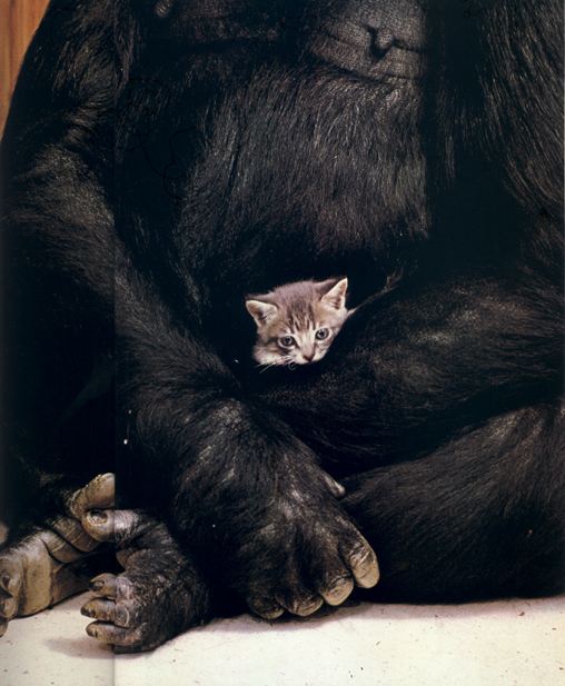 Коко и ее первый котенок - Мячик