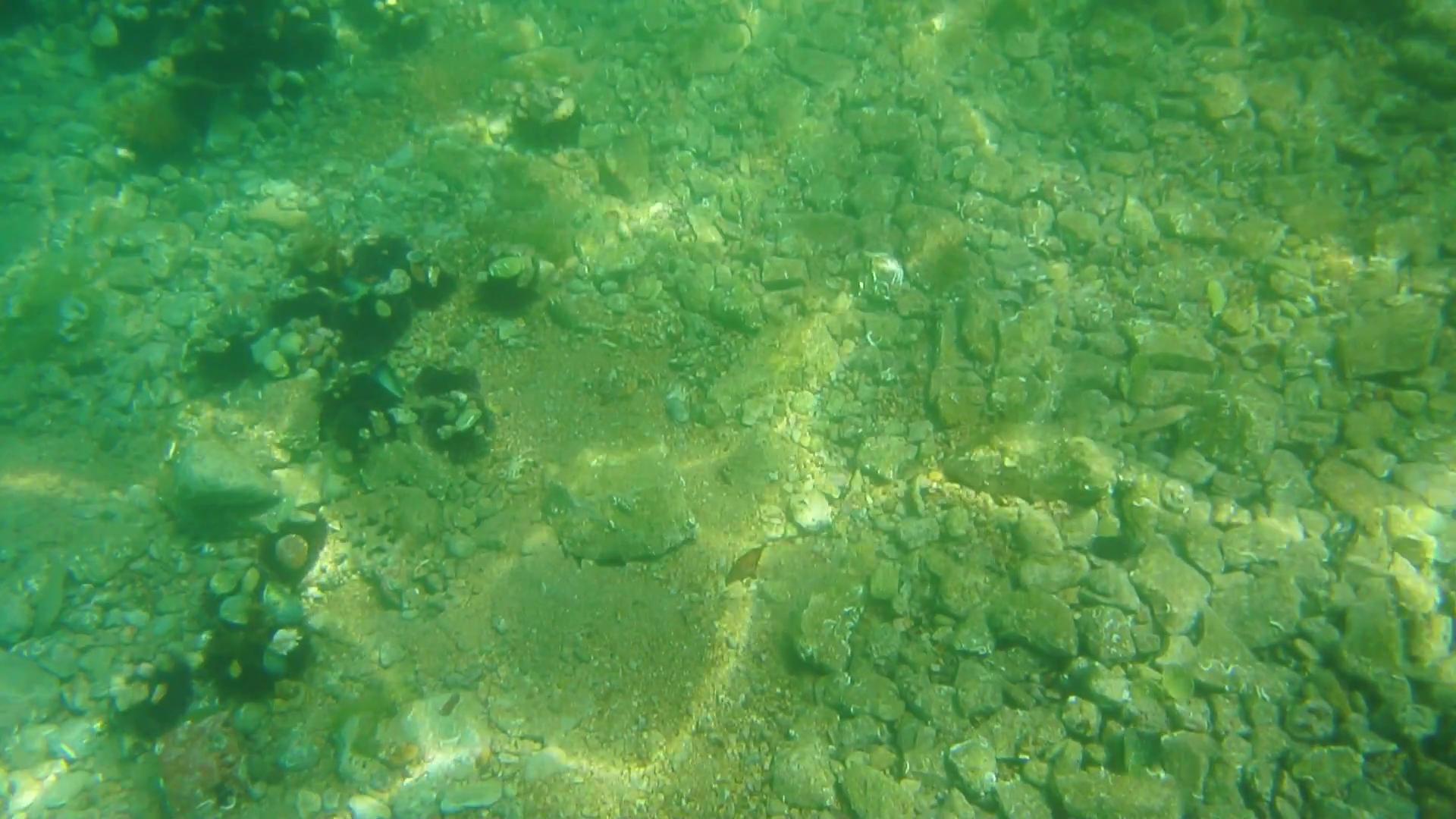 Как черви в огороде, крошечные существа на морском дне смешивают и перерабатывают органический материал