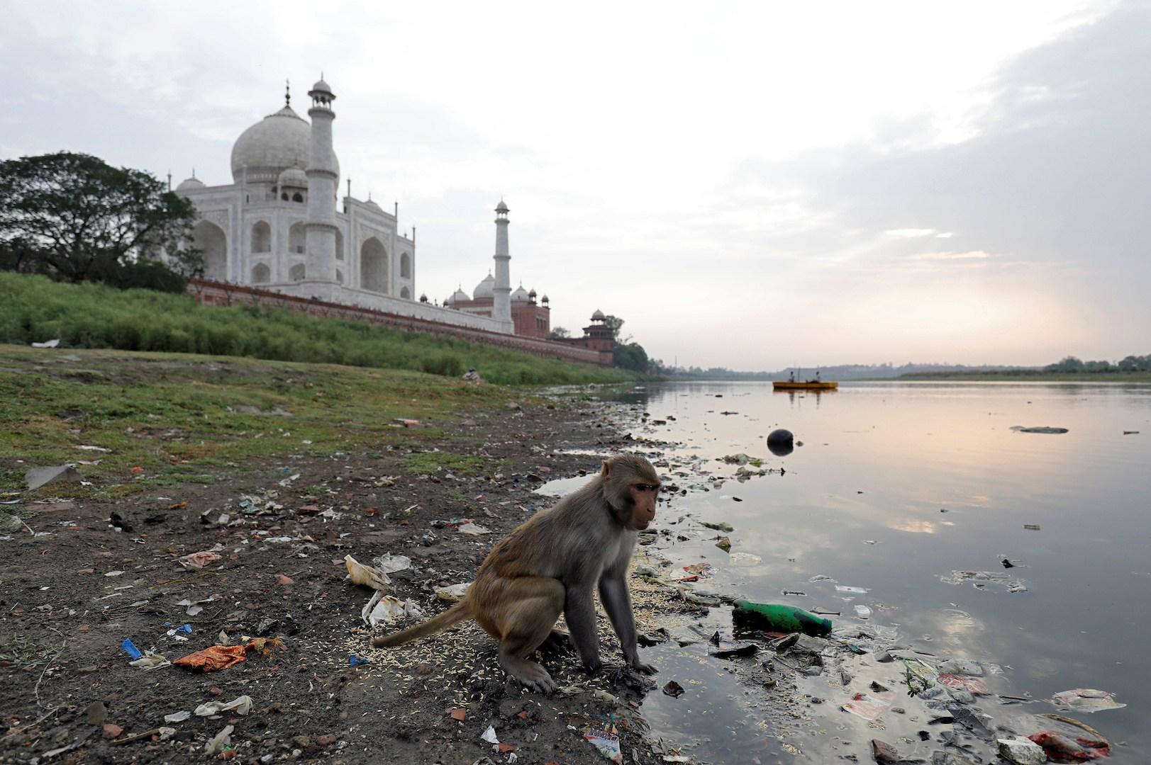 Грязь с реки Джамна оседает зеленым налетом на пористой каменной кладке Тадж-Махала