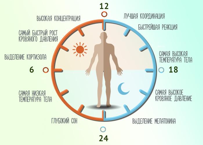 Меньше всего калорий в состоянии покоя мы тратим, когда температура нашего тела достигает минимума
