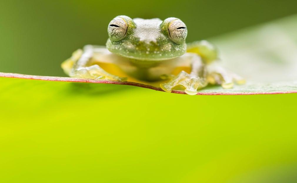 Alex Edwards/University of Plymouth/British Ecological Society