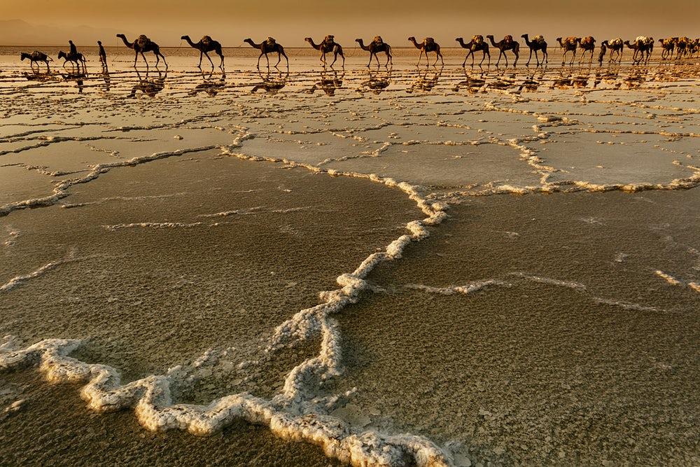 Караван идет мимо соленого озера Асаль в Эфиопии. Озеро расположено в Афарской котловине на 155 м ниже уровня моря и является самой низкой точкой Африки.