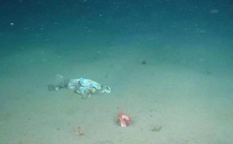 В мае 2018 года исследователи нашли на дне Марианской впадины куски пластикового пакета. Он погрузился на глубину 10898 м