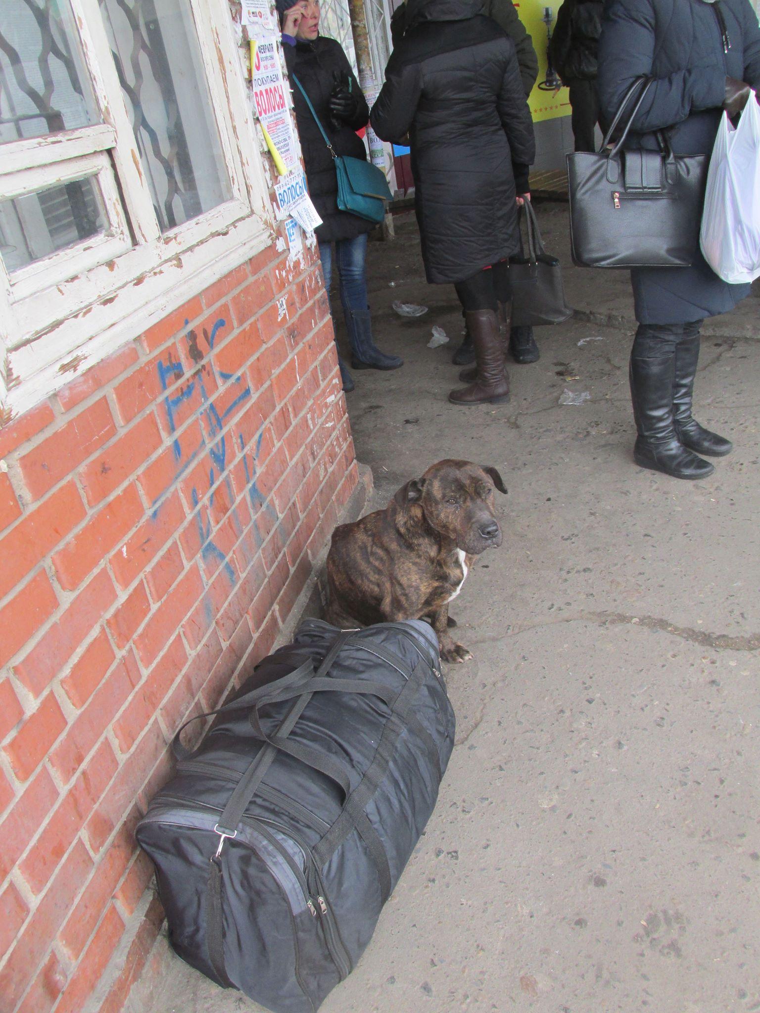 Породистый брошенный пес на вокзале в г. Константиновка