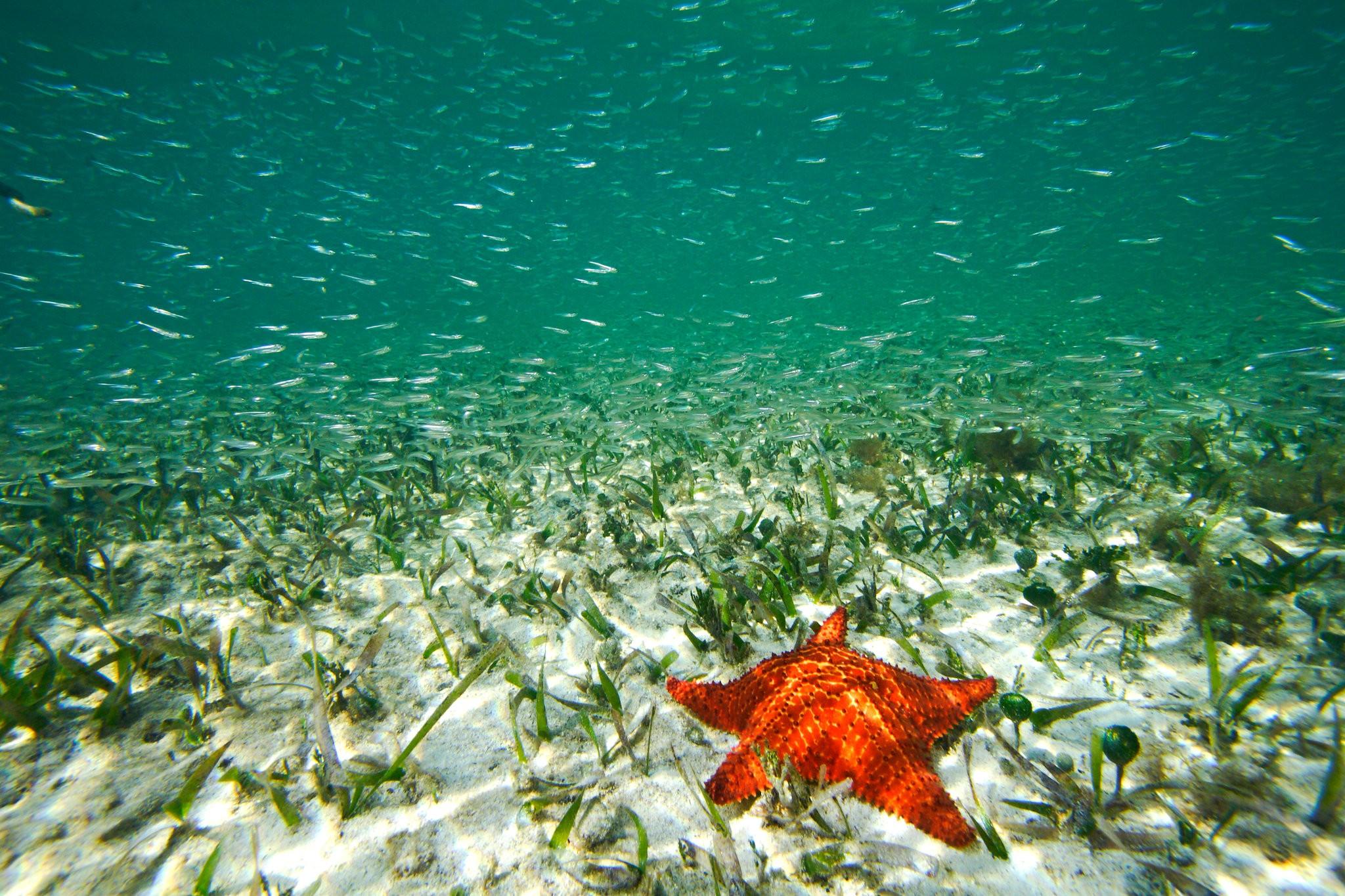 Морские травы не только служат домом для многих организмов, но также помогают удалять углекислый газ из атмосферы / NY Times