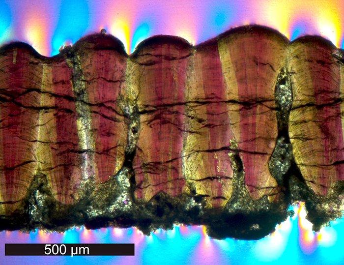 Вчені розгадали давню загадку про теплокровність великих динозаврів